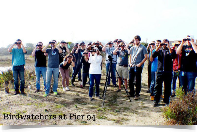 birdwatchers at pier 94